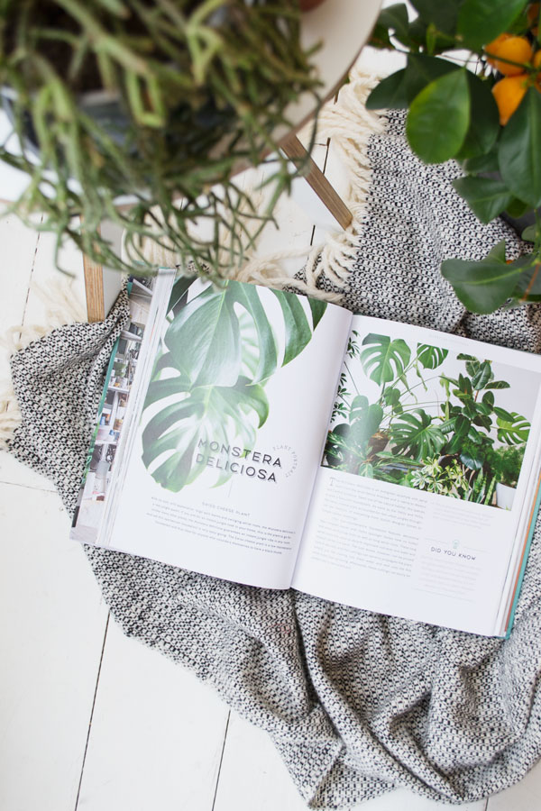 urban_jungle_book_review_urban_jungle_living_styling_with_plants02