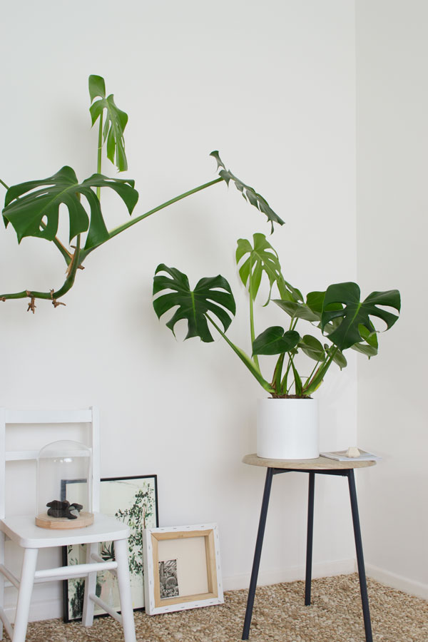 Urban Jungle Styling and Living With Plants book Tiffany Grant-Riley