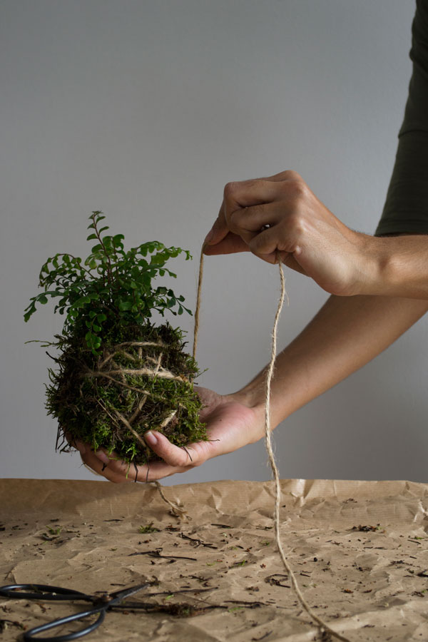 How to make a Kokedama hanging plant moss ball - step four