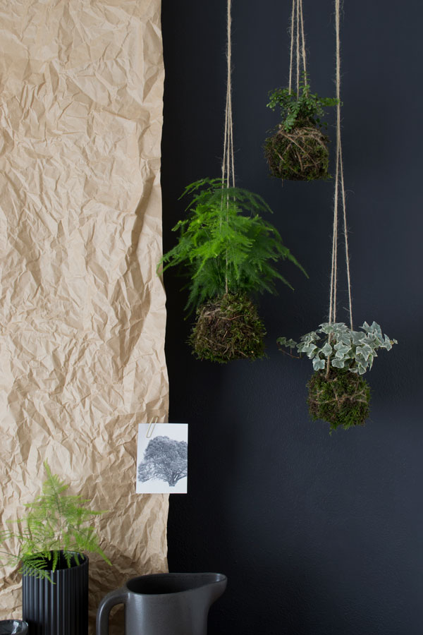 A Kokedama hanging garden against a navy background