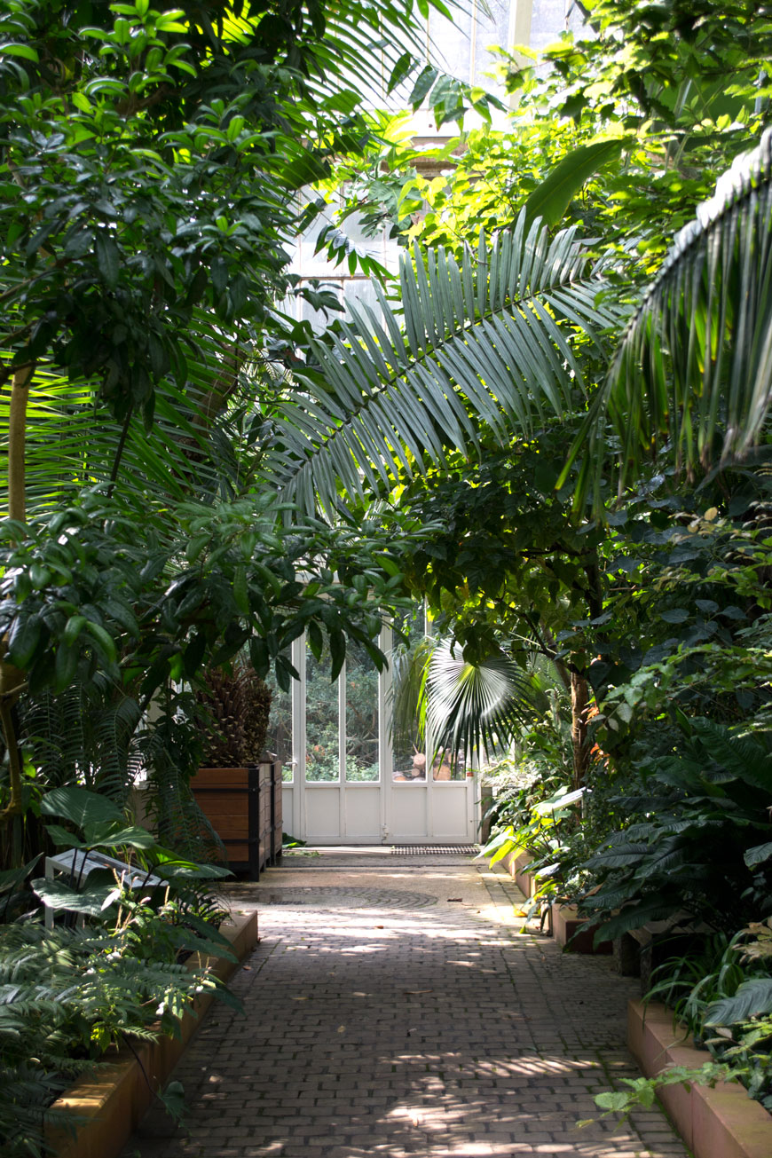 Looking down a tropical plant filled path through white glass doors into the next glasshouse in the botanical gardens Meise