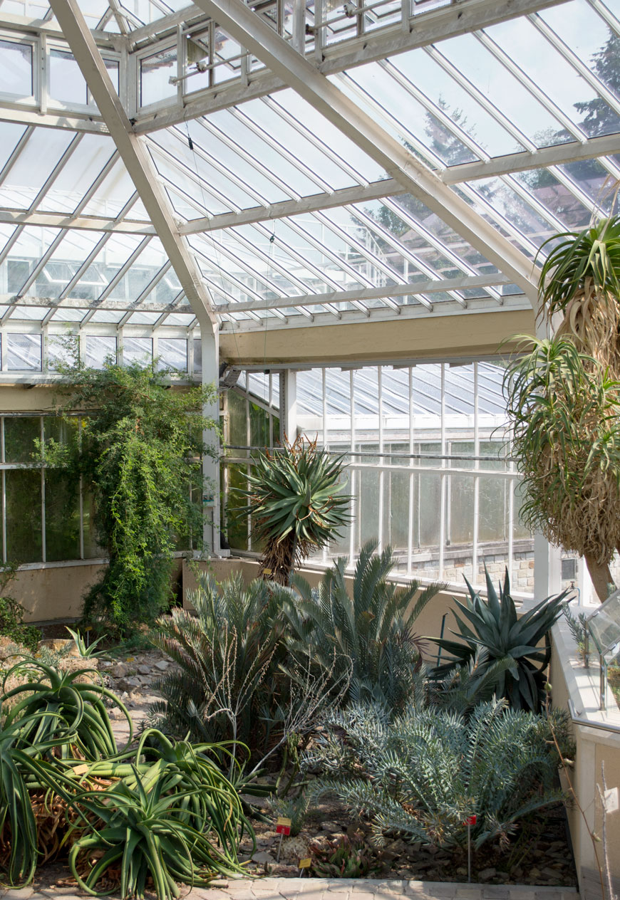 Cacti and succulents in dry, arid heat inside the glasshouse at botanical gardens Meise