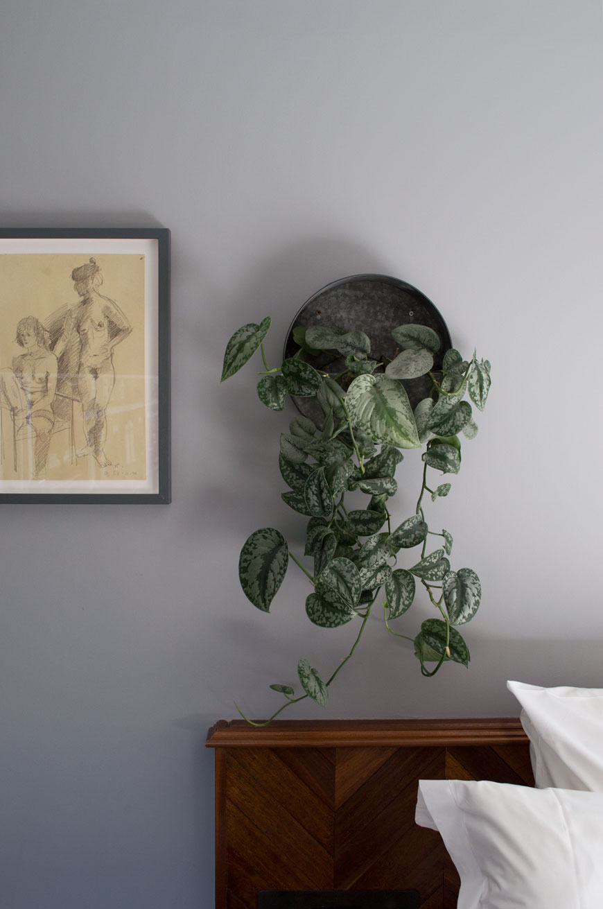Trailing Pothos wall plants and unique pieces of art on the grey walls inside the rooms of The Pilgrm Hotel