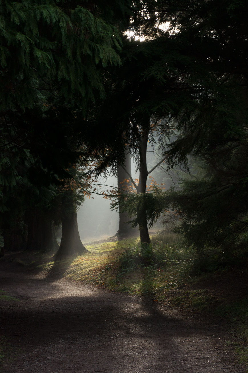 A magical mist coming through shadowed pine trees and my slow New Year intentions for 2019.