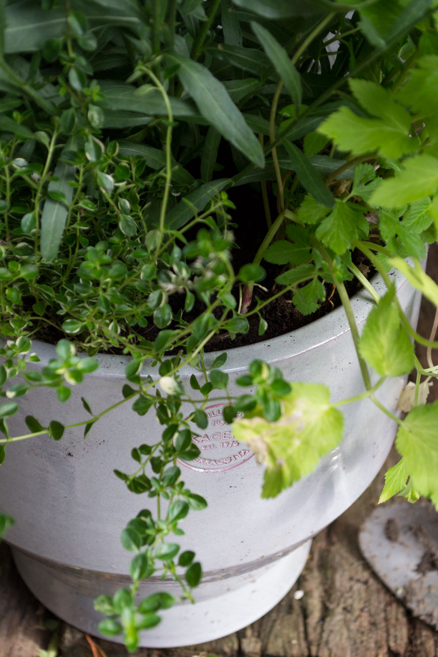 How to make the garden feel like an extension of your home with potted trailing herbs to use in the kitchen.