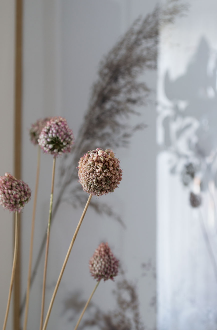 Blush pink dried alliums from my garden and displayed in a vase in my living room.