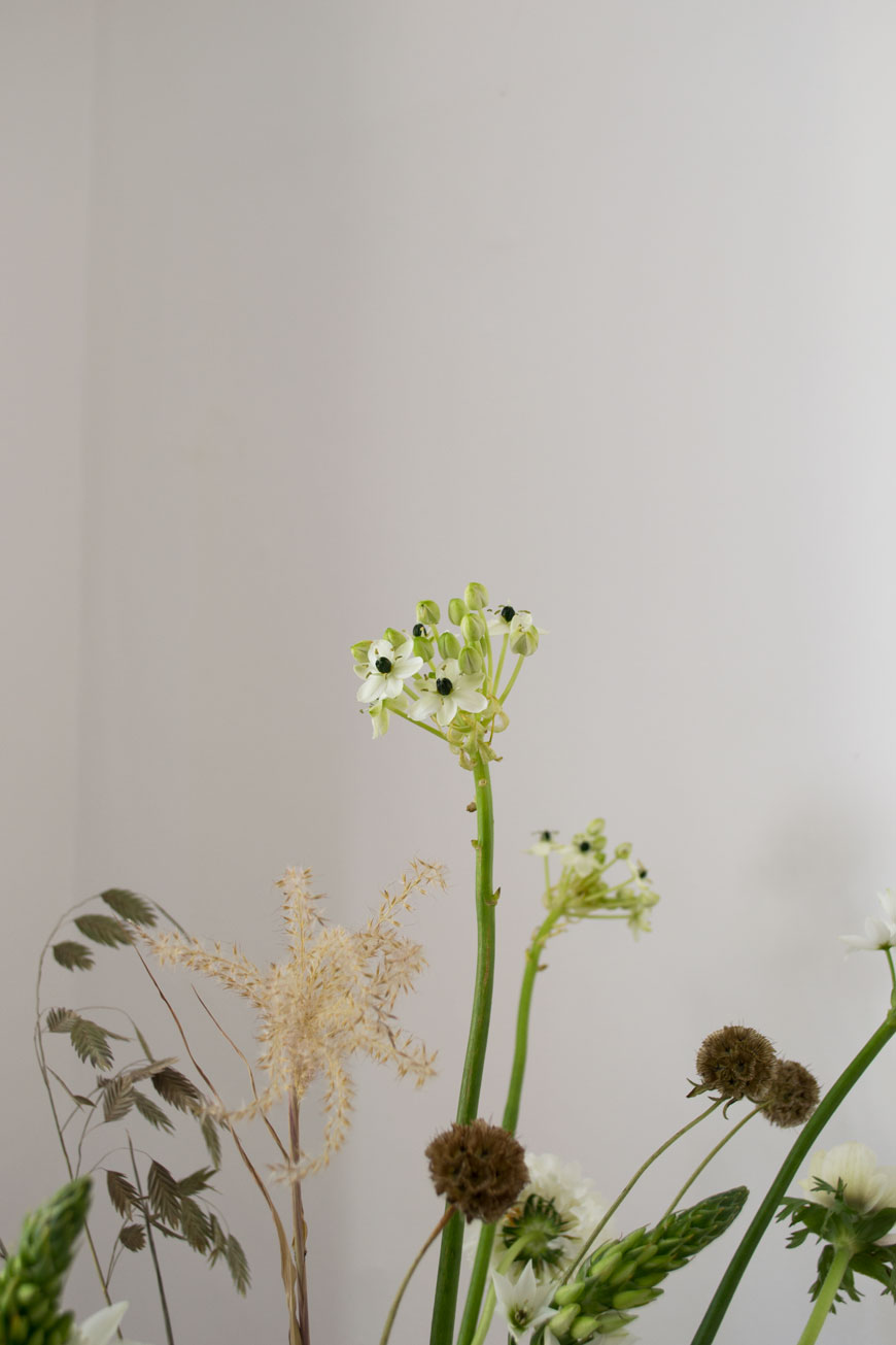 A close-up of candle-like, upright stems of white Ornithogalums mixed with textural grasses and other white spring flowers in a Georg Jensen vase.